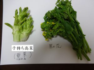 子持ち高菜・菜の花